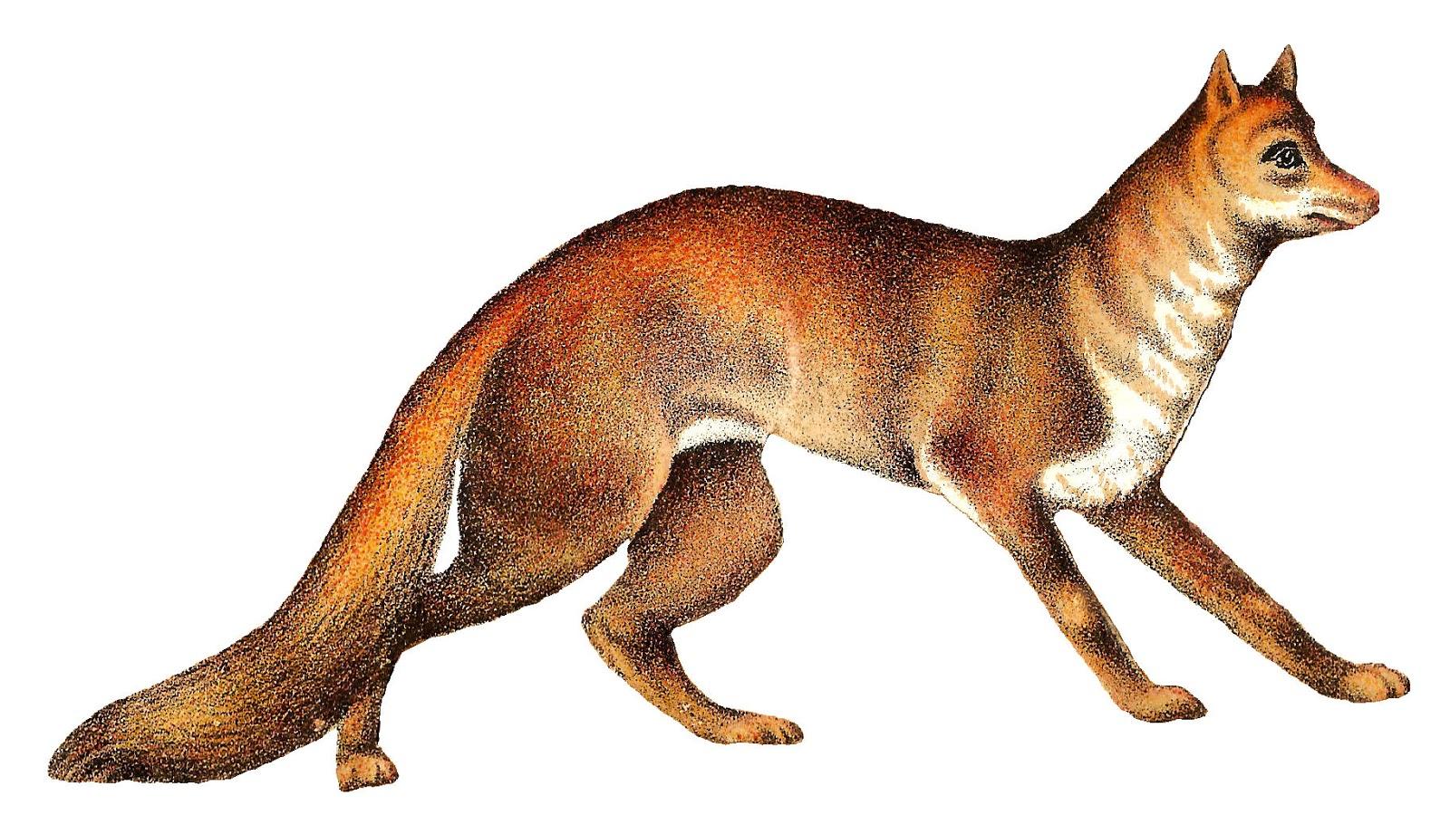 antique images free animal clip art buffalo fox antique