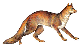 fox image antique animal illustration digital download