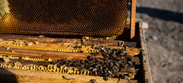 Una colmena de abejasPMA/Danil Usmanov