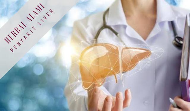 obat sakit liver herbal alami