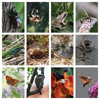 Garden%2BBiodiversity%2B%25281%2529.jpg