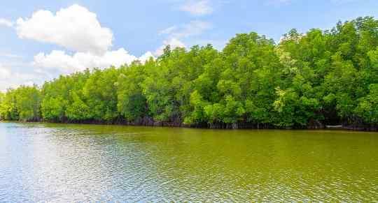 Pengertian Hutan Mangrove: Ciri-Ciri, Jenis, Fungsi & Manfaat