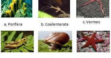 Contoh Hewan Invertebrata Filum Porifera Rasmi Ru