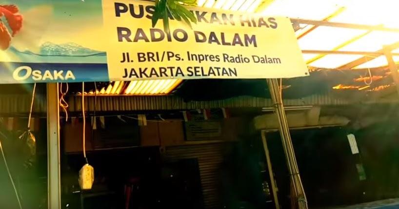 Jual Ikan Hias Di Jakarta Selatan
