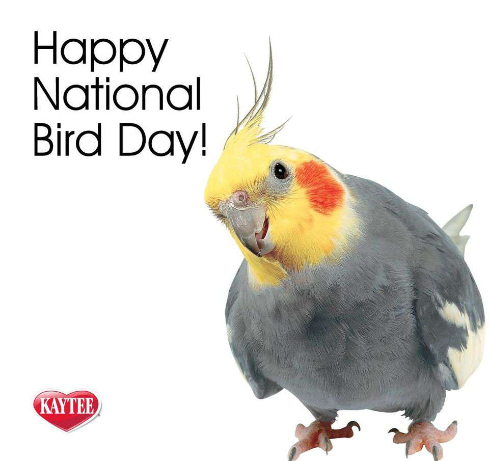 National Bird Day Wishes pics free download