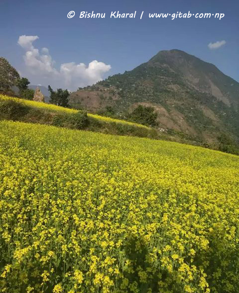 Chandrakot Rural Municipality Rupakot Gulmi by Bishnu Kharal