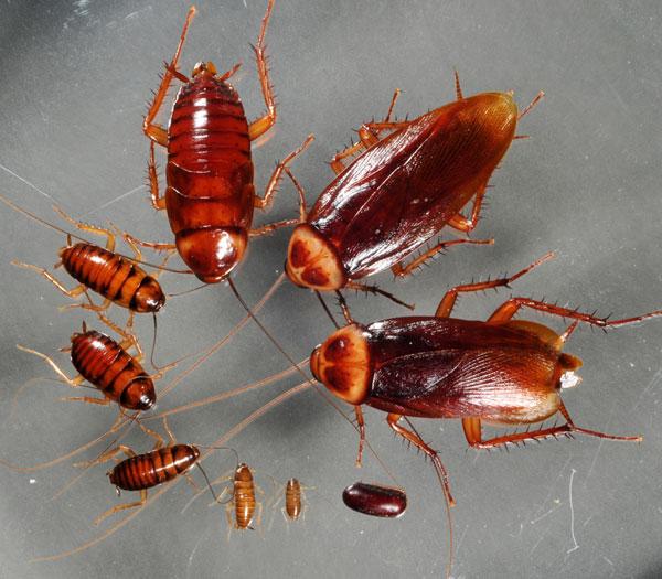 Mẹo hay giúp bạn tự diệt và quét sạch côn trùng không dùng hóa chất