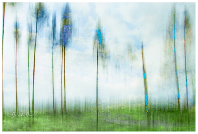 grasgrün, himmelblau, Sauerland, Wald, forest, textureblend, art, intentional camera movement, icm, Kunst, Fotokunst, photoart, Dorothe Domke