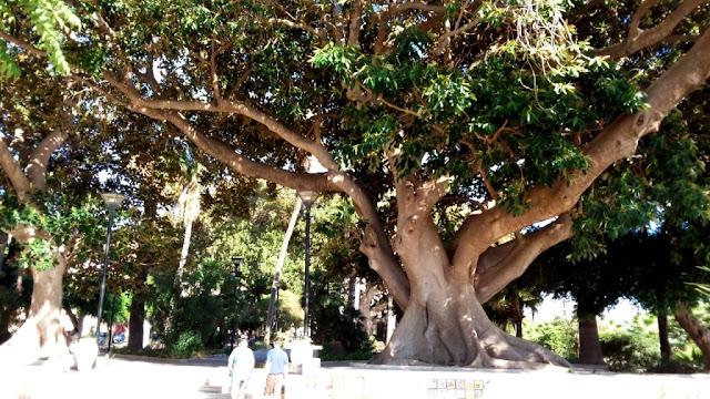 Giardini della Cattedrale Mazara del Vallo