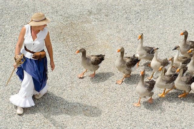 Ducks in old Macdonalds farm!