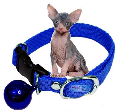 kalung kucing