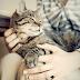 Do Cats Feel Love? Do Cats Have Feelings?