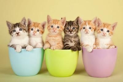 Como cuidar de um gato recém nascido