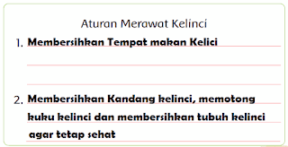 aturan merawat kelinci www.jokowidodo-marufamin.com
