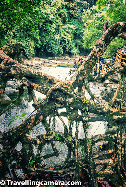 I wish we had more time to walk around the village, it's living root bridge and the water streams flowing under the bridge. Supposedly Mawlynnong village looks more beautiful in monsoons but november was also a reasonable month to appreciate it's beauty.