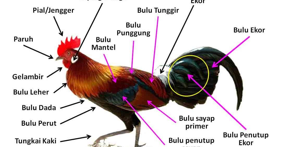 Tubuh Hewan dan Tumbuhan  Rangkuman Pengetahuan Alam Lengkap
