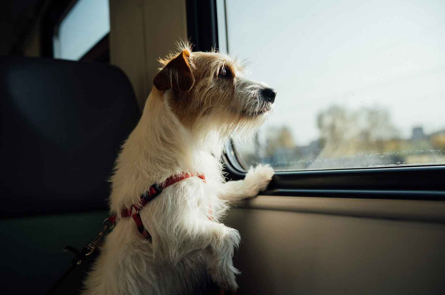 The Latest Tech Trends That Will Make Traveling With Your Dog Much Easier