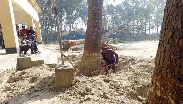 কাজিপুরে অনুমোদন ছাড়া বিদ্যালয়ের গাছ কর্তন
