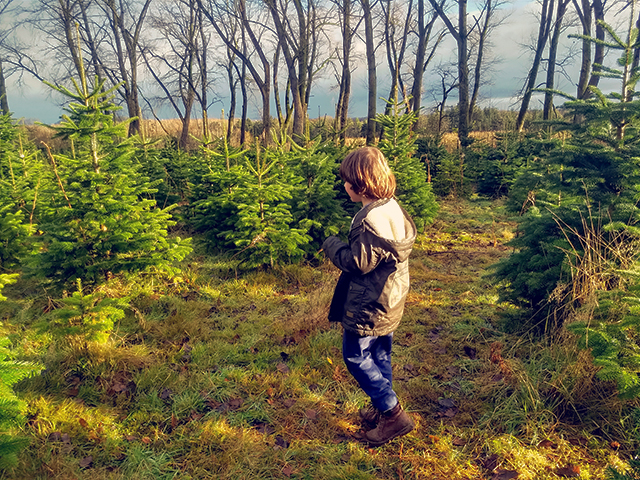 boy amongst the fir trees