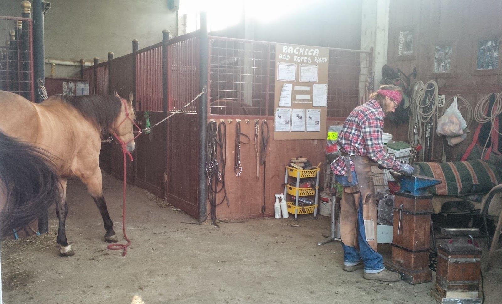 A farrier at Ropes Ranch