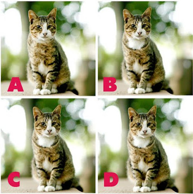Which image is different? image 8