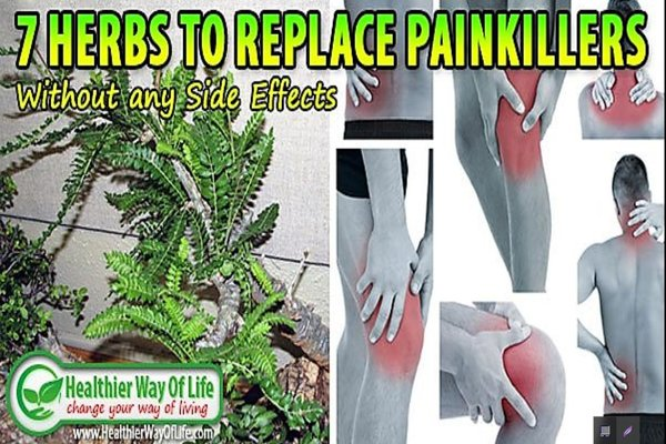 7 Herbs to Replace Painkillers Without any Side Effects