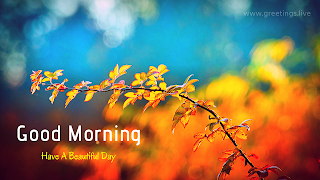 New good morning greetings live whatsapp status images