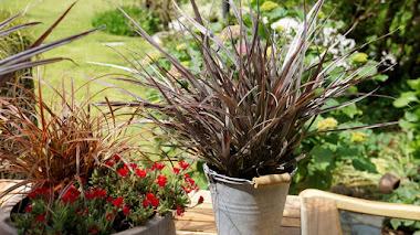 6 plantas de bajo mantenimiento especialmente atractivas por su follaje