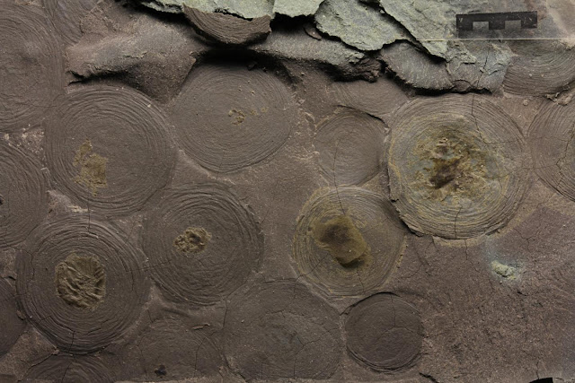 Biomarkers helped solving the mystery of 500-million-year-old microorganisms