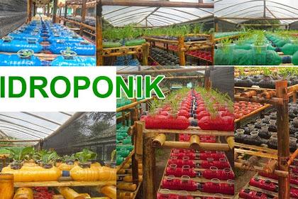 67 Istilah Pertanian Lengkap