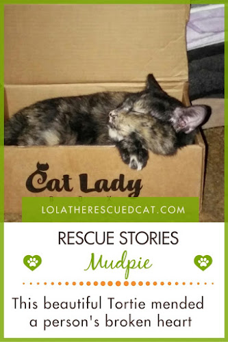 Tortie cat rescue story