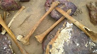 http://vnoticia.com.br/noticia/4166-iphan-vai-investigar-ossadas-encontradas-na-praia-de-manguinhos