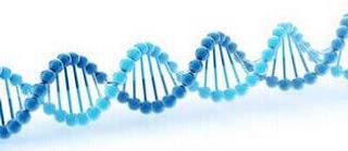 genetik test dna
