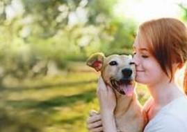Як я можу отримати більш дешевий Pet план медичного страхування?