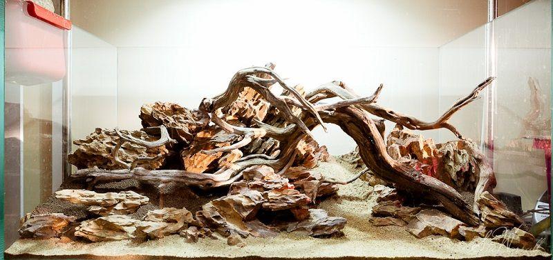 driftwood adalah kayu untuk aquascape