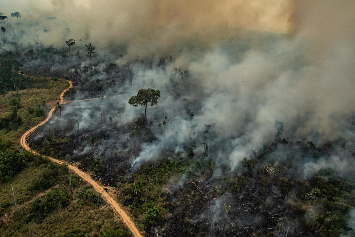 Total Kerugian Kebakaran Hutan Indonesia 5,2 Miliar Dolar