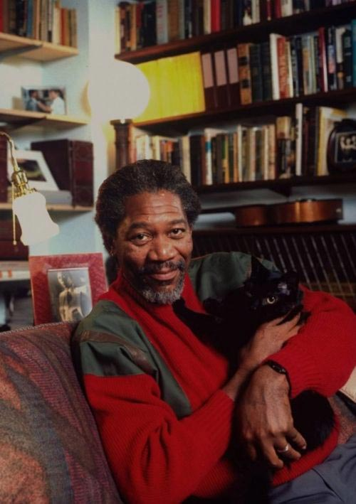 Morgan Freeman with a cat