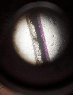 Daun Rheo Discolor Menggunakan Microskop www.jawabanbukupaket.com