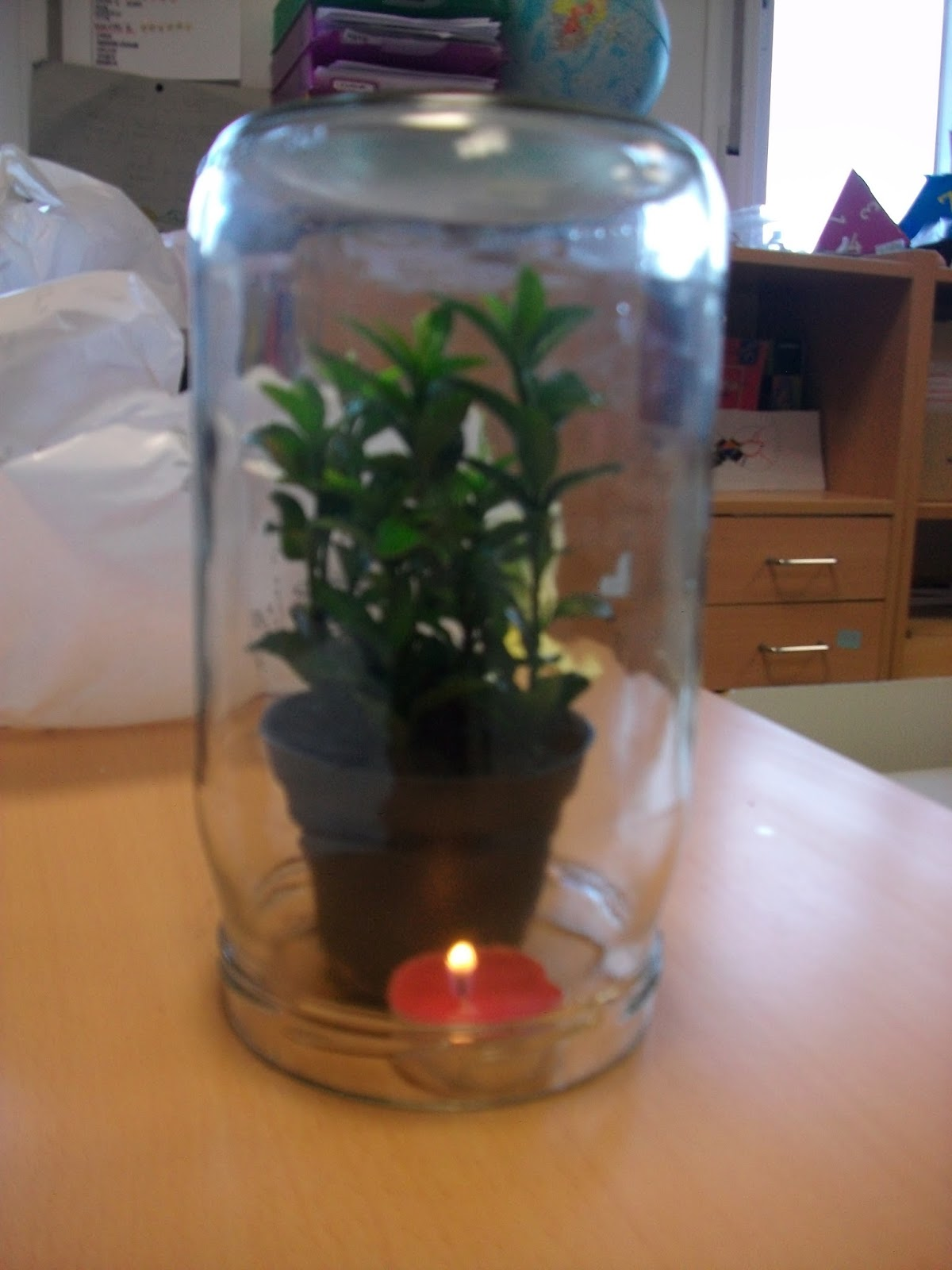 CIFRAS Y LETRAS Experimentos las plantas
