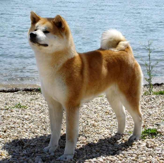 Cani da compagnia taglia medio grande