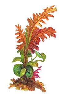 plant leaves image old artwork illustration download clipart