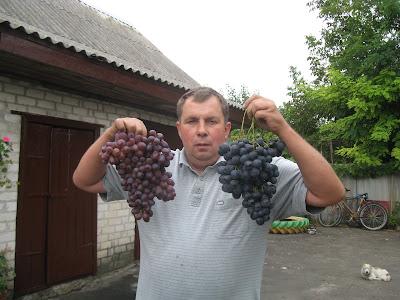 Страшенський і Шоколадний прйс винограду