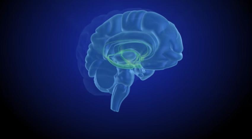Dopamin Otak