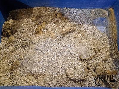 Review Penggunaan Pasir Happy Cat Sand Hari Ketujuh