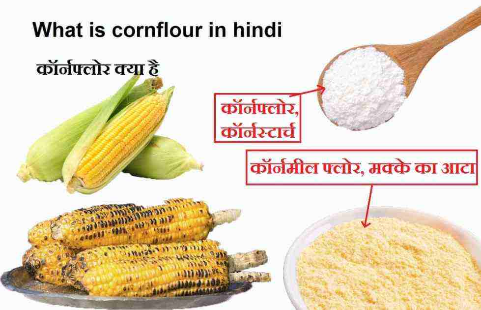 what is cornflour in hindi, corn flour  in hindi information,