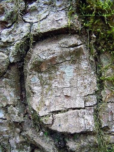 Tronco d'albero con un volto
