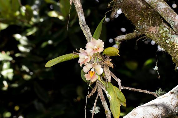 Orquídeas tropicales 1b649b4021a