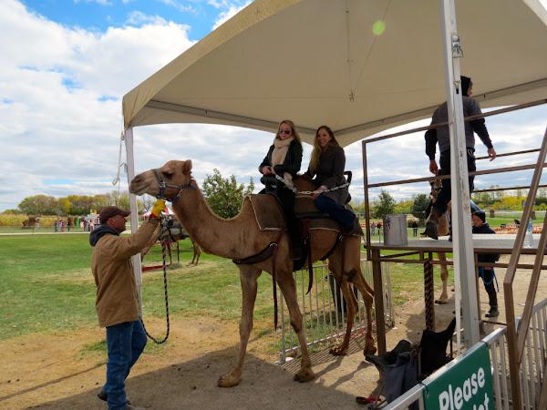 Save a Horse, Ride a ... Camel
