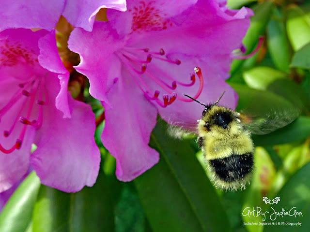 Pollinators On Pink Rhododendron 14 Photos