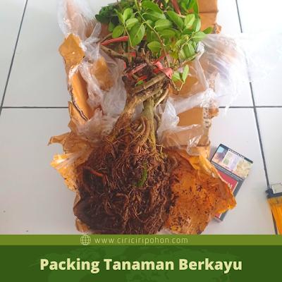 Packing Tanaman Berkayu